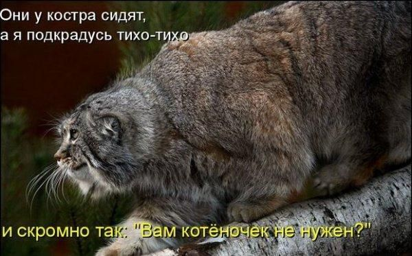 http://www.ostudent.ru/uploads/post-11-1226347800.jpg